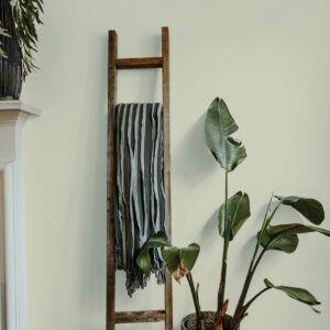 Salon avec échelle en bois et plante verte, mise en valeur par notre beige vert LICHEN - N°1961 Peintures 1825