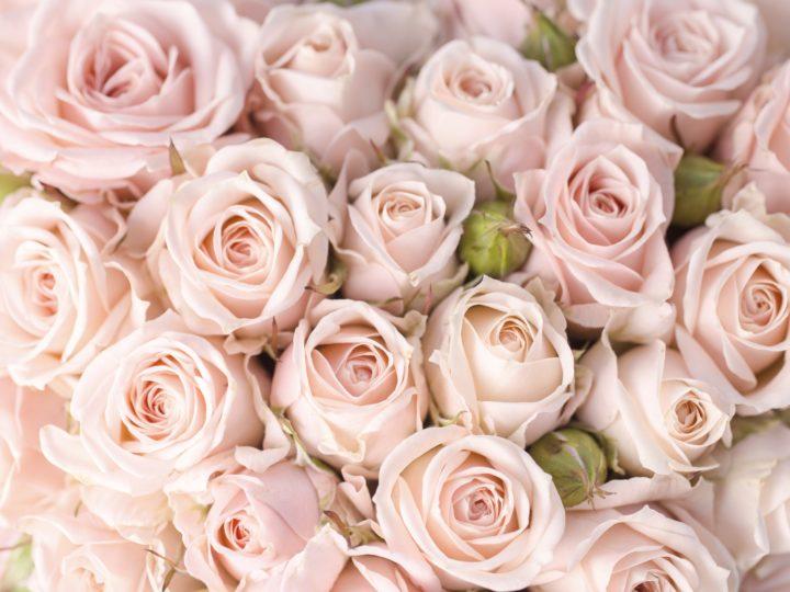 La vie en rose 🌺