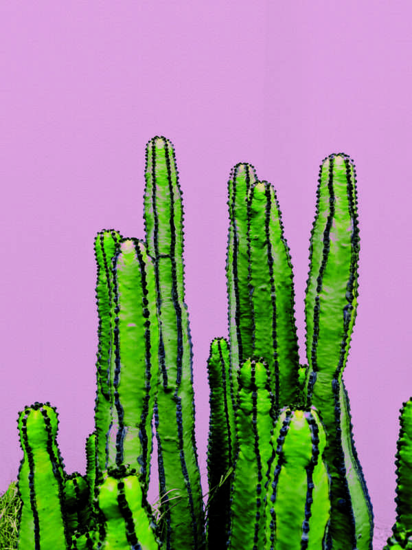 Plants on pink concept.  Cactus.  Mini