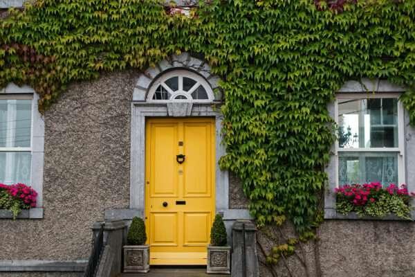 Maison avec plantes grimpantes sur la façade et porte d'entrée mise en valeur par notre jaune vif LEMON CURD - N°2020 Peintures 1825